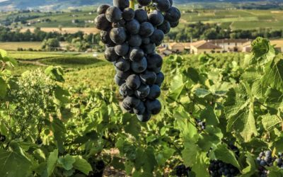 The Beaujolais, Kingdom of Gamay