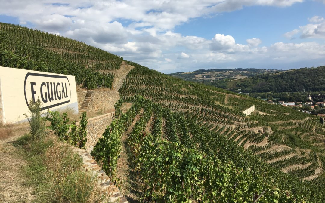 The great vintages of the Rhône valley